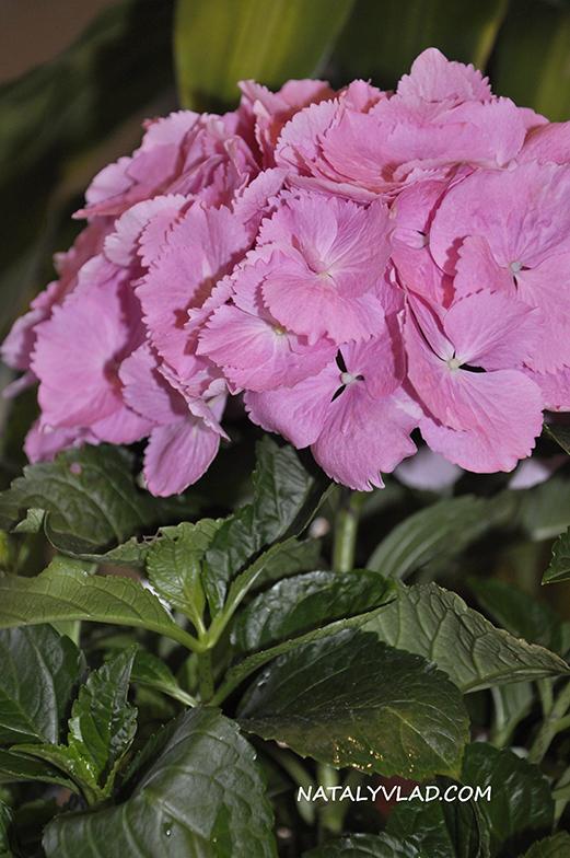 2012-11-15 - Цветочный подарок от Тёмы, Мельбурн, Австралия