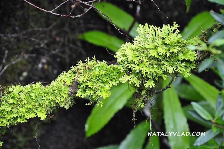 2012-12-28 - Rainforest, Gordon River Cruise, Strahan, Tasmania
