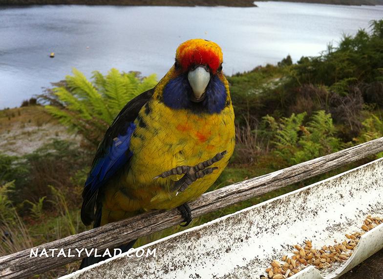 2012-12-30 - Lake Pedder Chalet, Tasmania