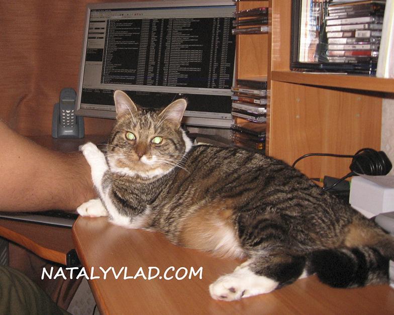 2007-11-24 - Наш кот Тимоха, Санкт-Петербург, Россия