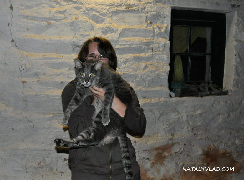 2012-02 - Кот в караван парке, Cape Jervis, Южная Австралия