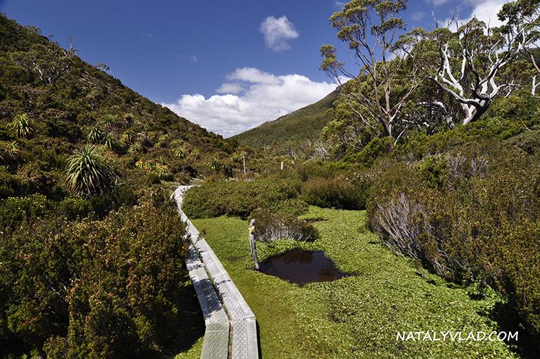 2012-12-29 - Пеший трек - Mt Rufus, Tasmania