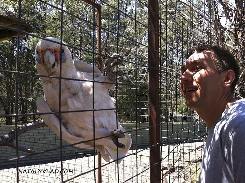 2013-01-05 - Забавный попугай в Tasman Zoo, Тасмания