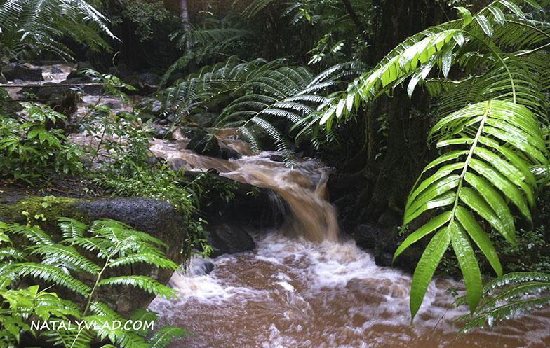2013-02-11 - Track to Manoa Falls, Oahu, Hawaii