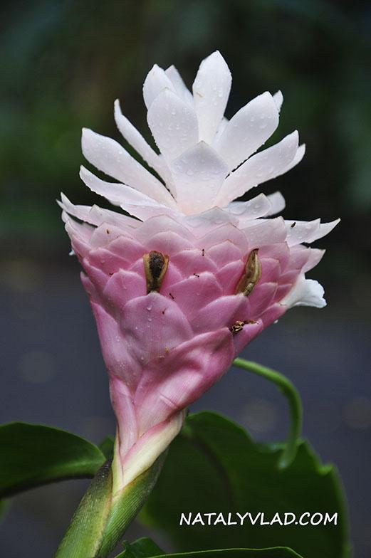 Waimea Valley, Botanical Garden, Oahu, Hawaii
