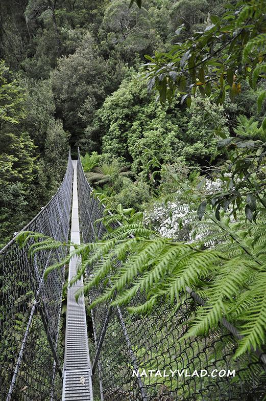 Montezuma Falls Walk, Tasmania