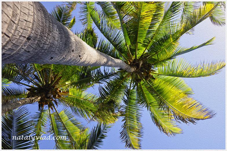 Black Sand Beach, Big Island of Hawaii, USA