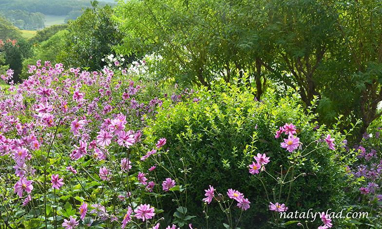 Mount Lofty Botanic Garden, Adelaide, South Australia