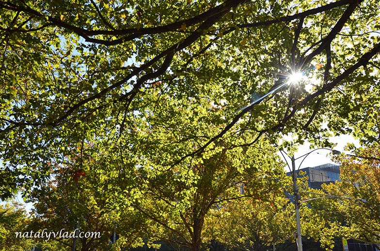 Осень в Мельбурне, Австралия