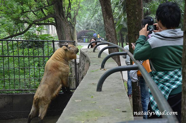 В зоопарке Шанхая