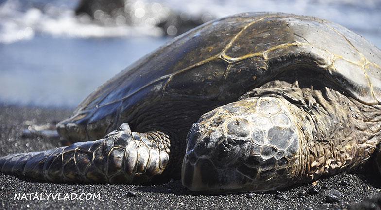 Гавайи фото | Пляж с черным песком Punaluu Black Sand Beach