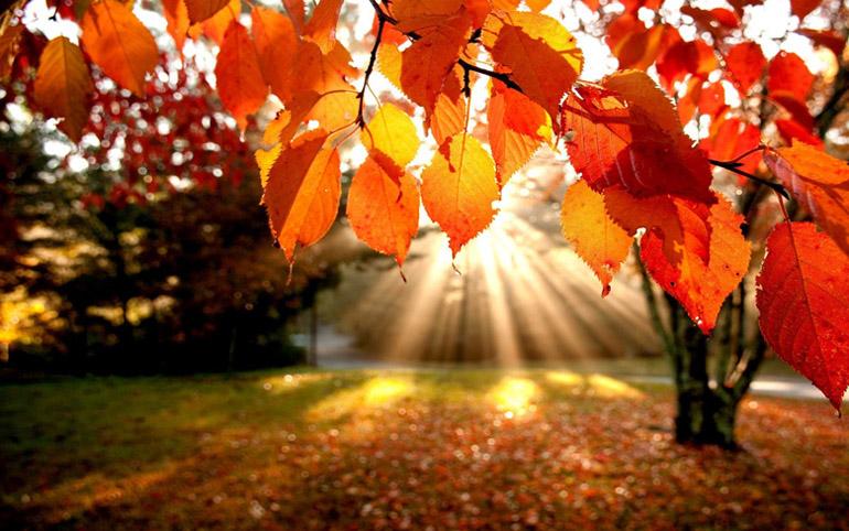 Осень фото | Красивые фото осени