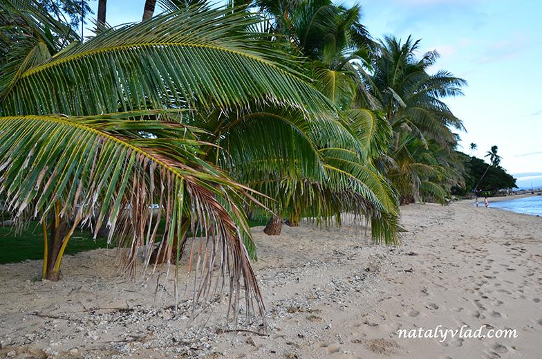 Фиджи | Отдых на Фиджи фото