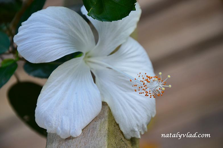 Отдых на Фиджи | Garden of the Sleeping Giant