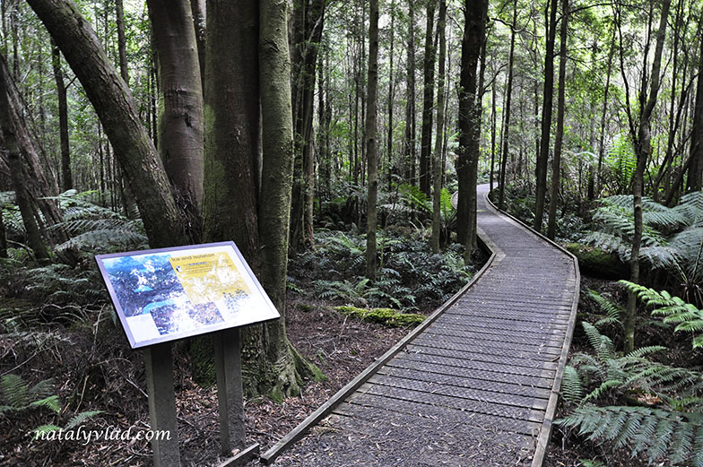 Тасмания | Водопад Нельсон остров Тасмания