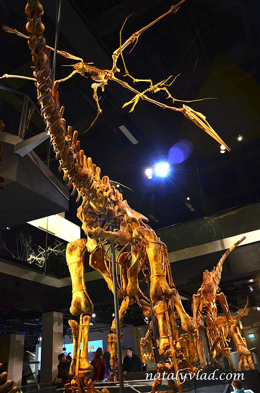 Австралия Мельбурнский музей