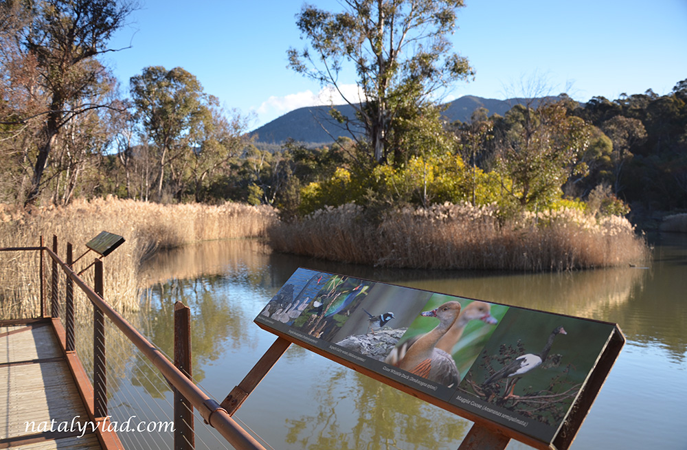Sanctuary, Tidbinbilla Nature Reserve, Australia