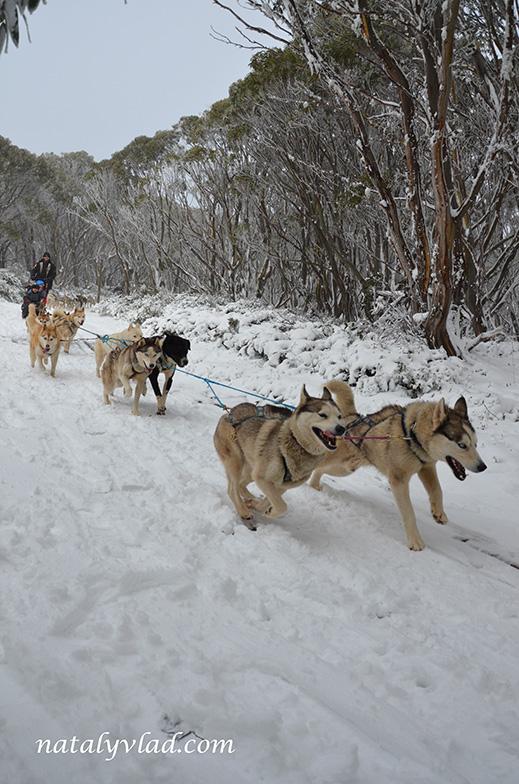 Горнолыжный центр в Австралии Гора Бау-Бау