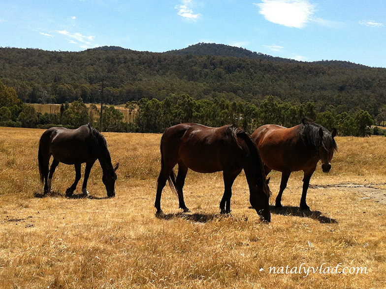 Douglas-Apsley National Park, Tasmania, Australia
