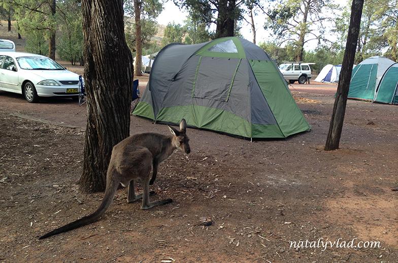 Flinders Ranges, Wilpena Pound, Australia