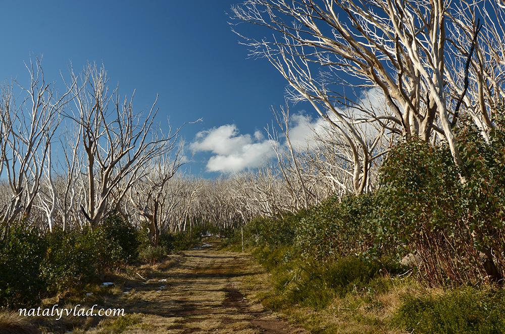 Trails, Lake Mountain Alpine Resort, Australia