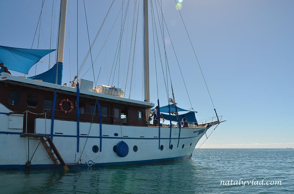 Whales Tale Cruise, Schooner Island, Fiji