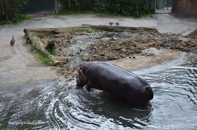 Зоопарк в Окленде, Новая Зеландия