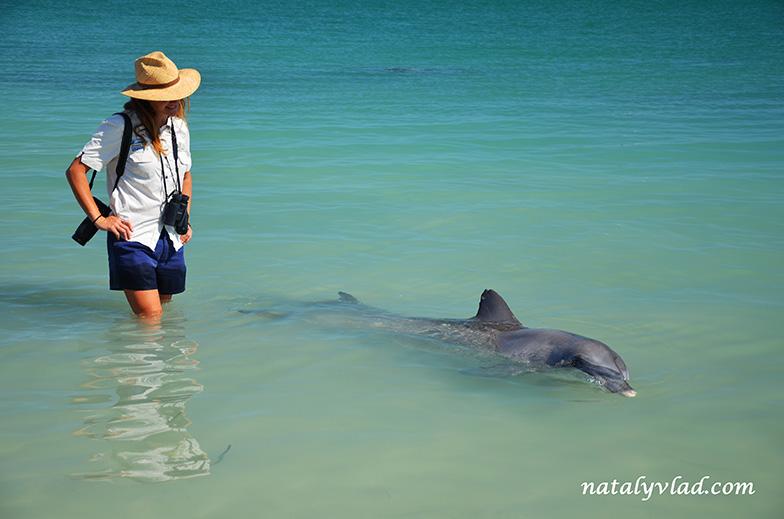 Дельфины в Австралии | Блог Наты и Тёмы