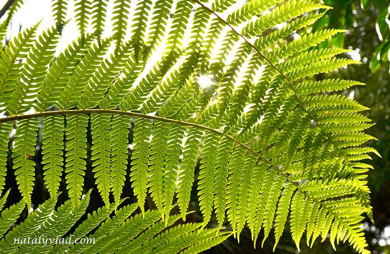 Geelong Botanic Gardens, Geelong, Australia