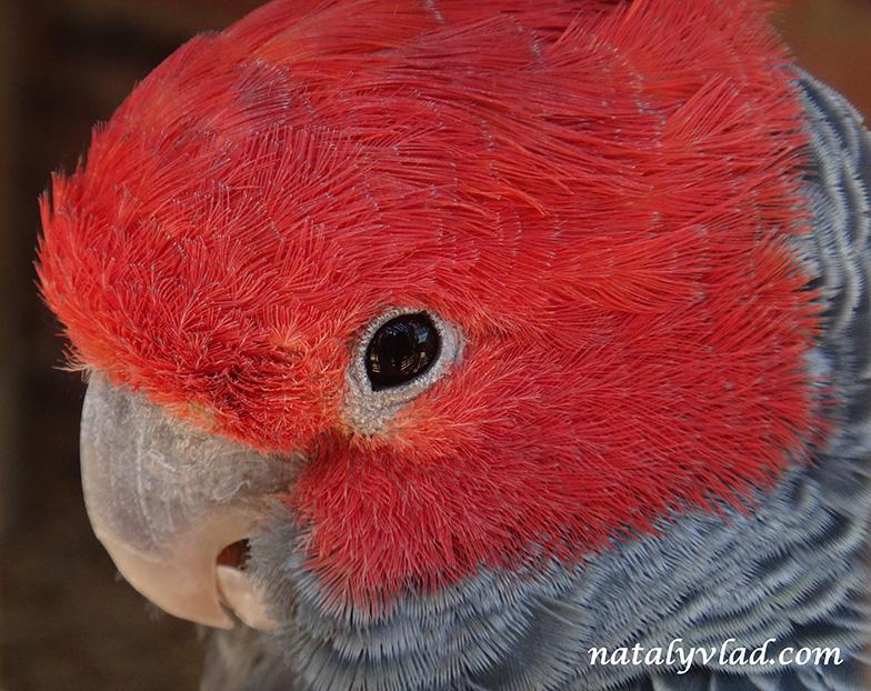 Попугаи в Австралии | Блог Наты и Тёмы
