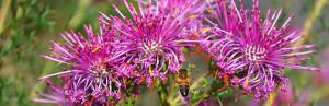 2013.09.29 – Путешествие по Австралии: VIC – Джилонг – Eastern Park – Geelong Botanic Gardens