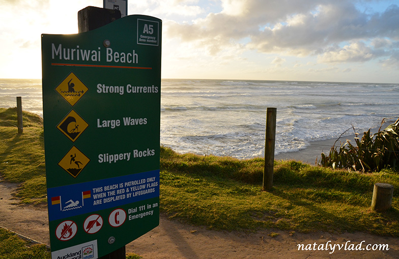 Muriwai Beach, Muriwai Gannet Colony, New Zealand