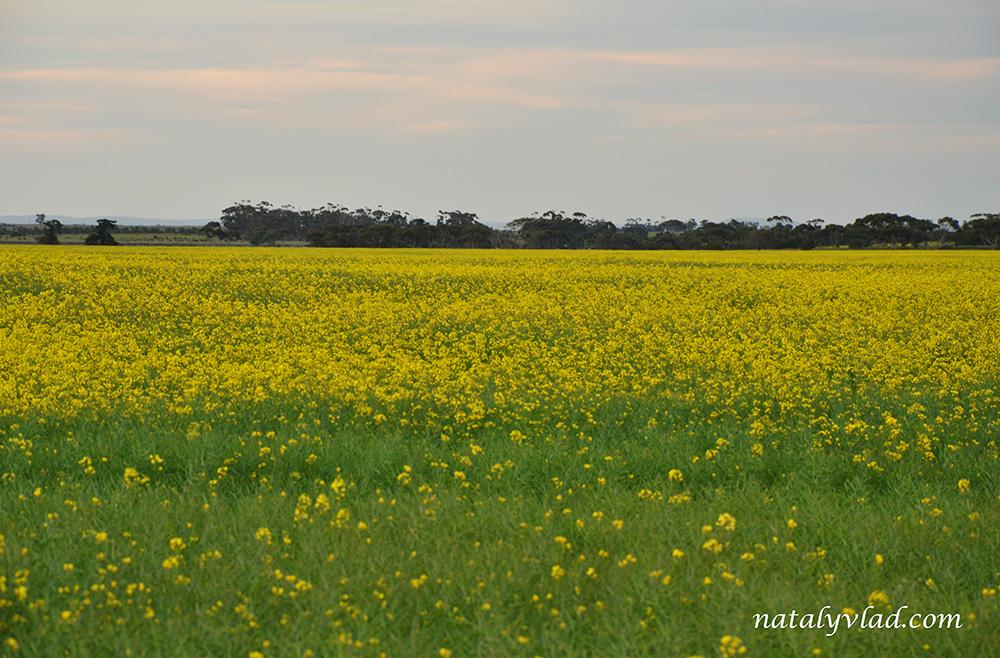 Цветущие поля, Мельбурн, Австралия