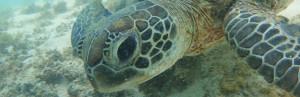 2013.11.04 – Путешествие по Западной Австралии: Ningaloo Reef – Сноркелинг на рифе Нингалу