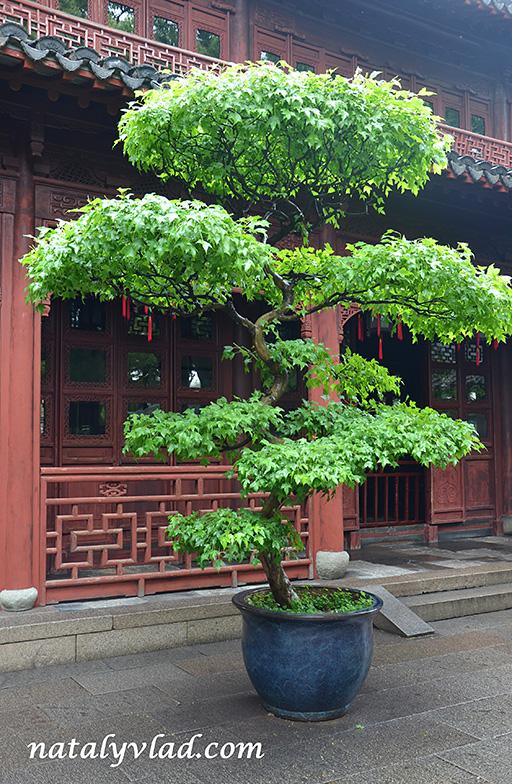 Шанхай Сад Юй Юань