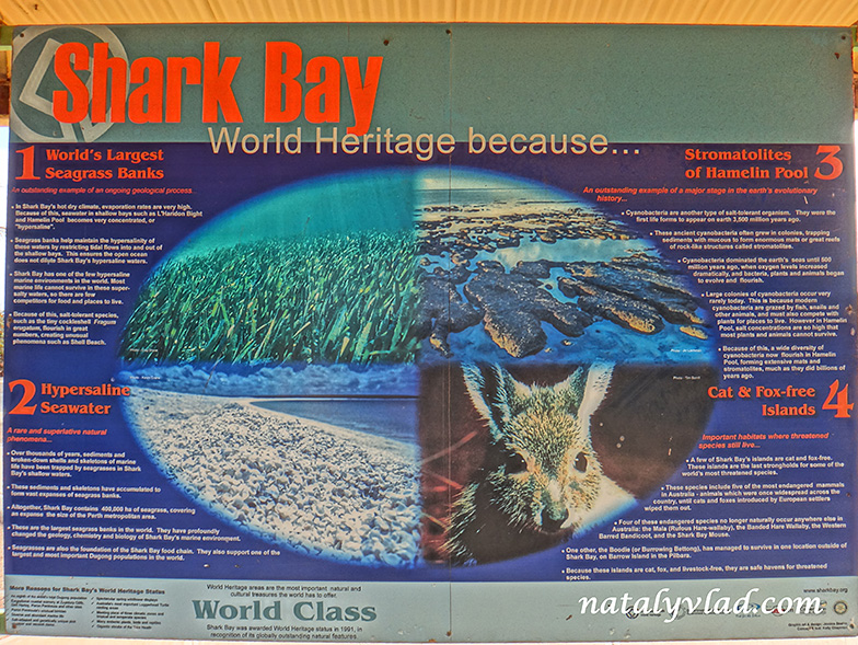 Shark Bay Western Australia