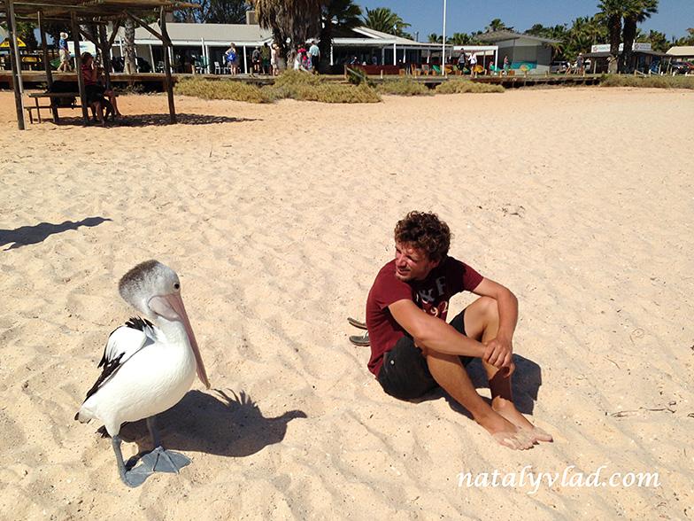 Манки-Миа Австралия | Блог Наты и Тёмы