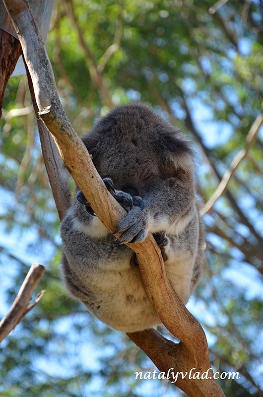 Животные в Австралии | Блог Наты и Тёмы