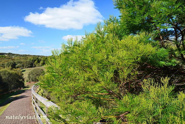 Tower Hill Warrnambool Australia
