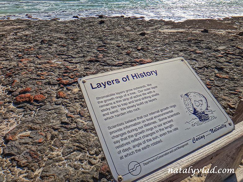 Stromatolites Western Australia