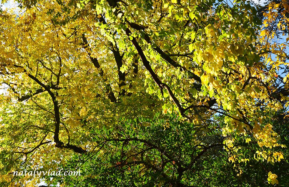 Осень в Австралии фото | Блог Наты и Тёмы