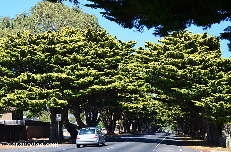 Остров Филлип Австралия | Блог Наты и Тёмы