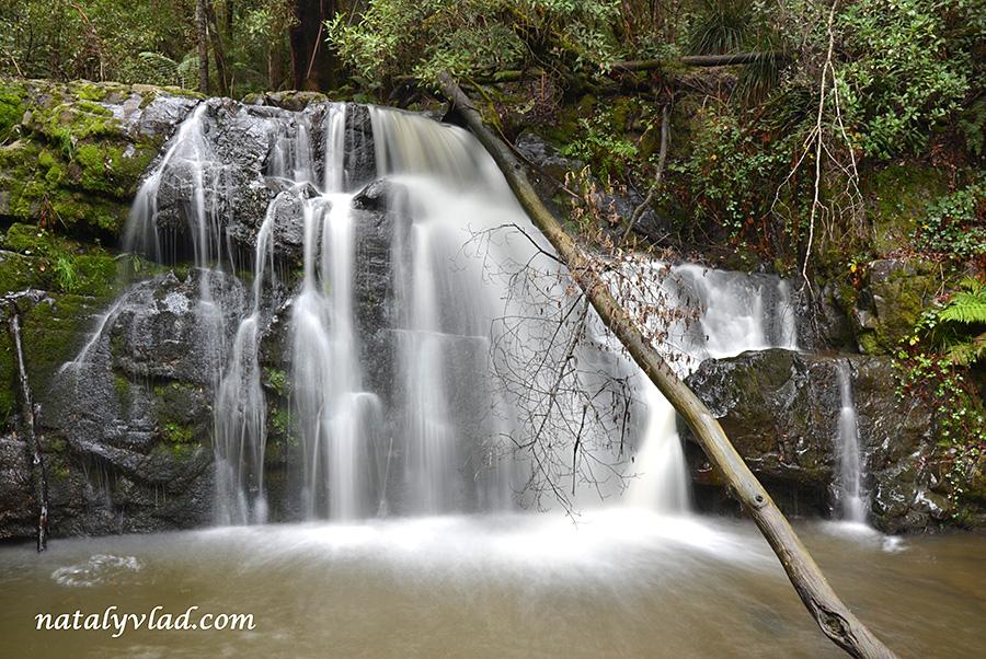 Природа Тасмании фото | Блог Наты и Тёмы