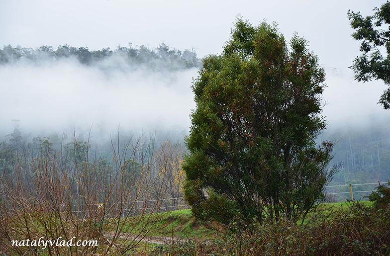Тасмания фото | Блог Наты и Тёмы