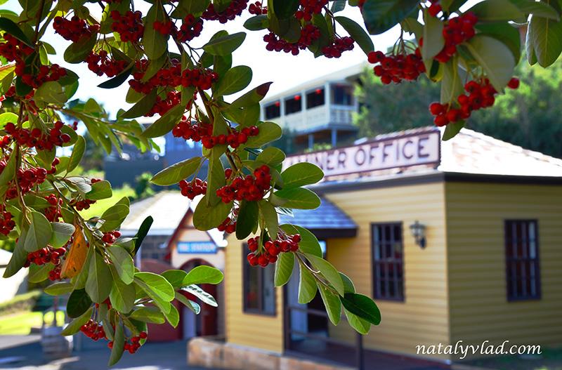 Рябина, Ветка рябины, Старое здание   Блог об Австралии