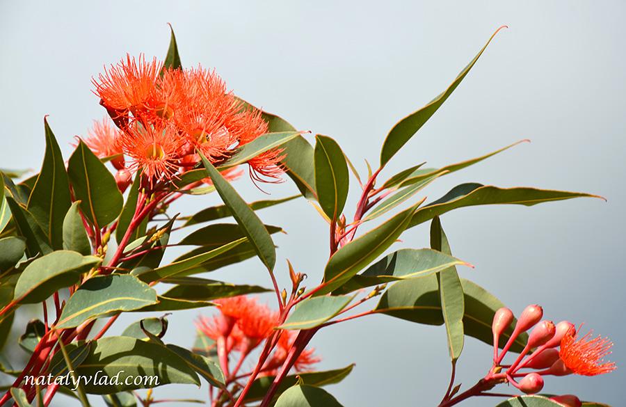 Природа Австралии | Блог Наты и Тёмы