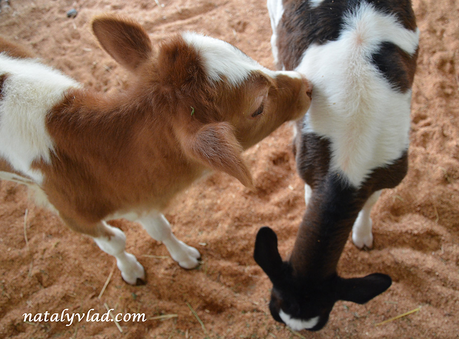 Австралия Ферма фото | Блог Наты и Тёмы