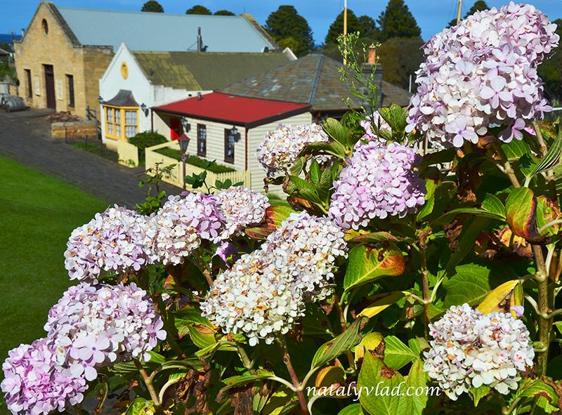 Старая Австралия Здания Цветы   Блог об Австралии
