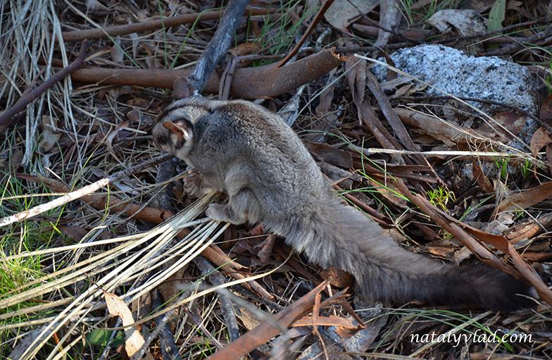 Странный зверь Животные Австралии