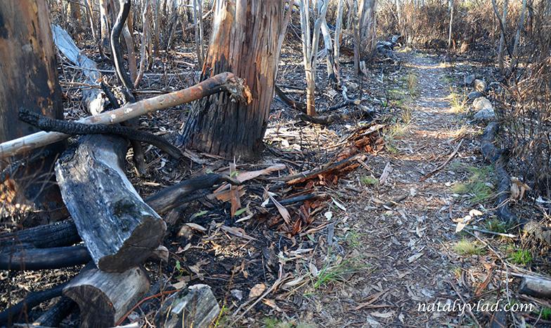 Австралия Погорелый лес Лесной пожар